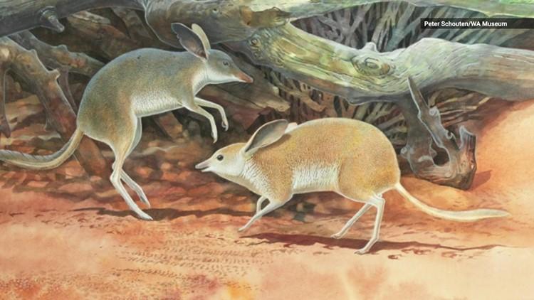 Check Out This Super Cute Australian Mammal