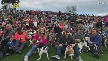 This Group of 1,029 Beagles Just Set a Guinness World Record