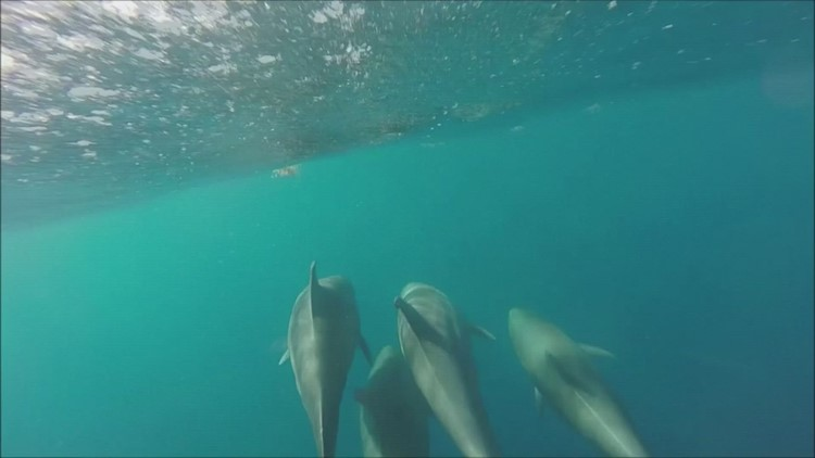 Dolphin Delight! Camera Captures Dolphins off the Coast of Florida!