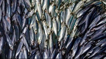 17% of sea life gone by 2100 if current climate change continues, study finds