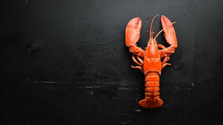 More than 5,000 pounds of lobster meat subject to recall