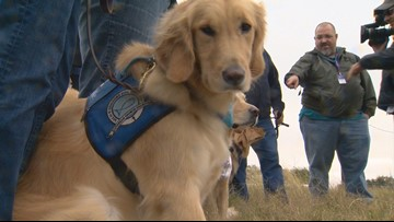 Therapy dogs bring comfort to Sutherland Springs