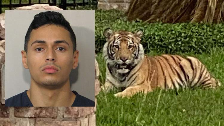 Man who escaped with pet tiger is out on bond on murder charge in Fort Bend County, Houston police say