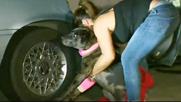 Dog rescues family before being shot during Houston home invasion, police say