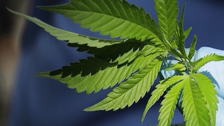 Marijuana law reform is gaining traction in Texas from people on both sides of the aisle