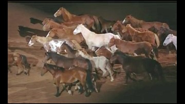 RodeoHouston wows crowd with tribute to bucking horses