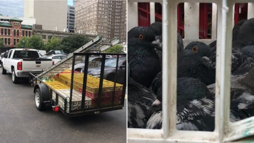 2 charged after hundreds of pigeons found trapped in crates in downtown Houston