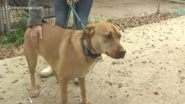 Adopt 1-year-old Nina on National Love Your Pet Day