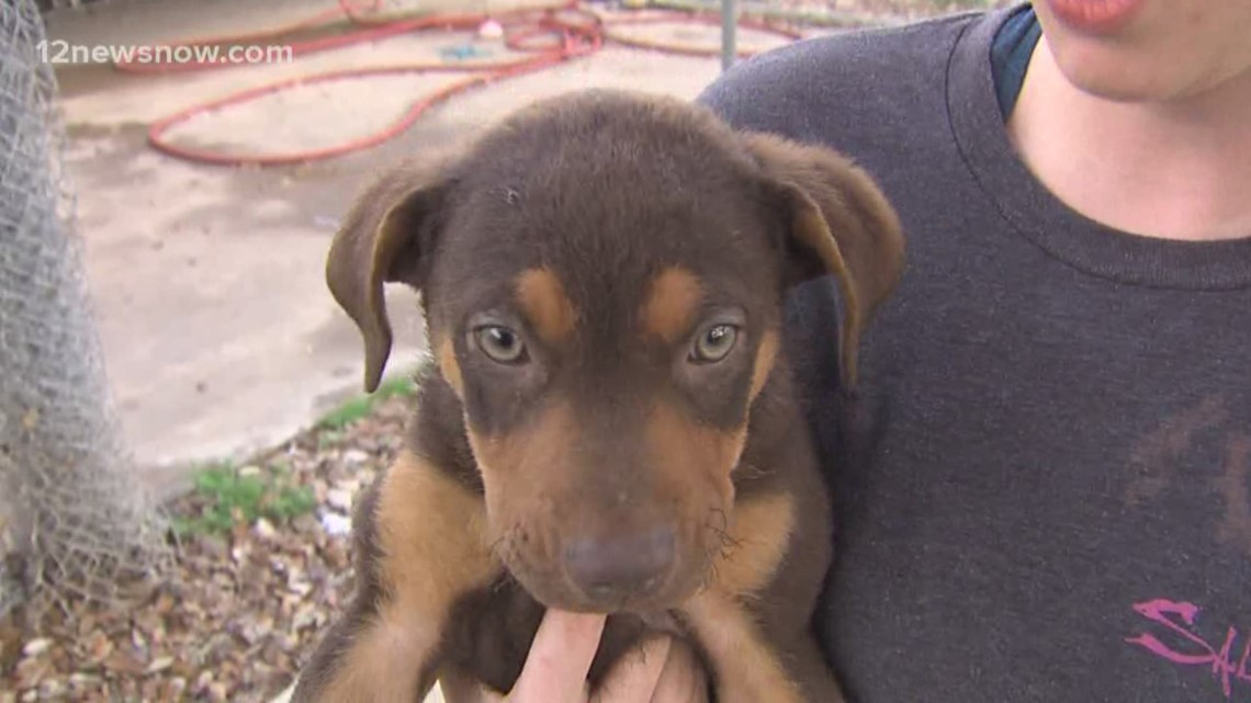 Crystal the pup needs her own family