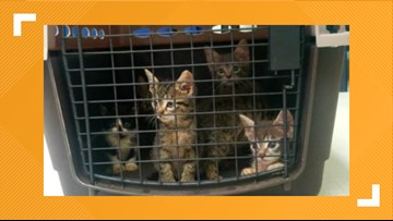 Do you know who threw six kittens trapped in a garbage bag into a Beaumont drainage ditch last week?
