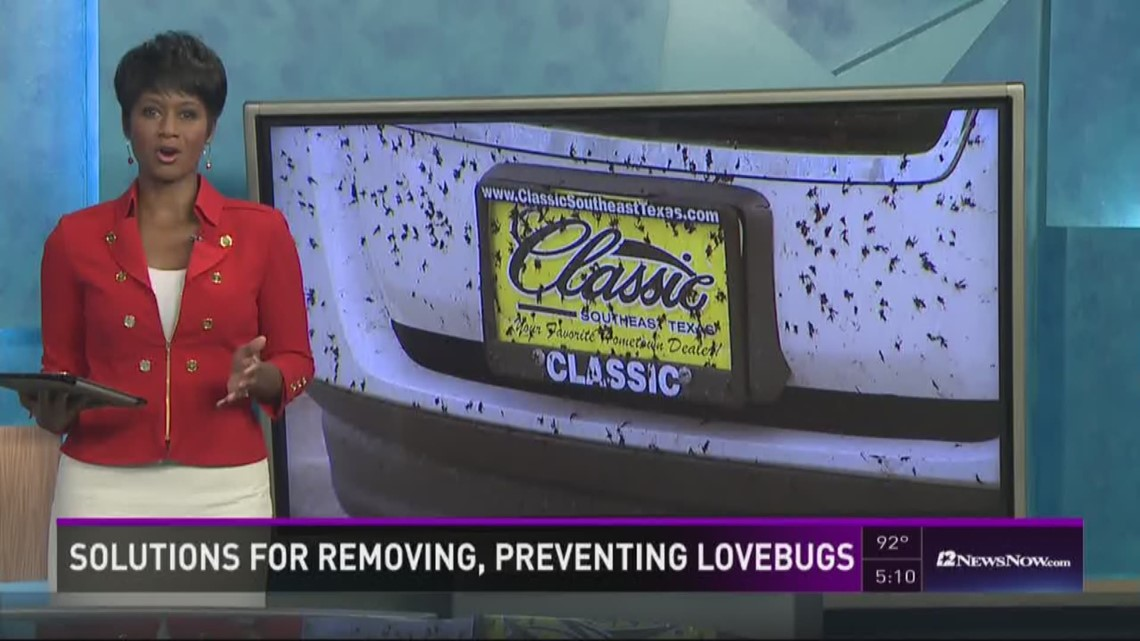 Solutions for removing, preventing love bugs on your car