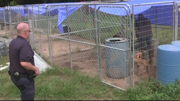 Dogs rescued from suspected puppy mill in Rose City