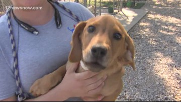 'Cowboy' the pup needs a forever family