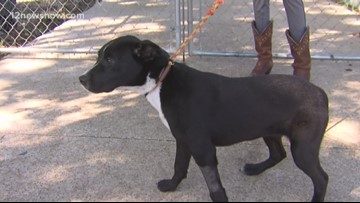 'Arlington,' energetic pup looking for a new home on 12News Pet of the Day