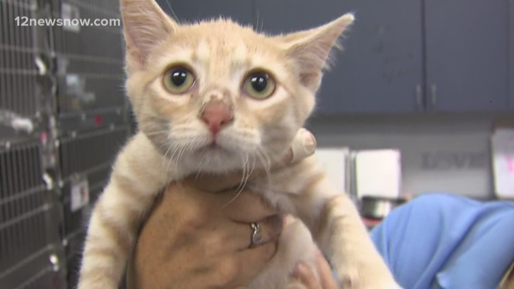 'Bramble,' two-month-old kitty needs a forever family