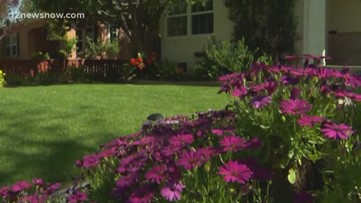 With spring around the corner, experts say allergy season may be brutal this year