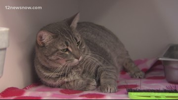 'Broccoli' is a kitty looking for a new home