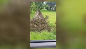 'Never a good idea,' Drainage District 7 removes tree from Nederland ditch