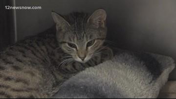 'Shamrock,' the lucky cat needs a new home