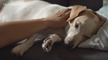 CDC extending social distancing guidelines to include pets