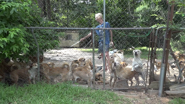 Ivanhoe man pleads for help with pack of dogs