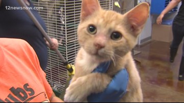 'Pepperoni,' 3-month-old kitten needs a home