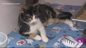 Pet of the day: Cute kitten Lucy Ten