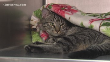 'Bobby Brown,' 5-month-old cat wants to join your family