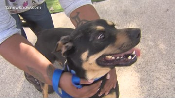 Energetic pup Jacks looks for a forever home
