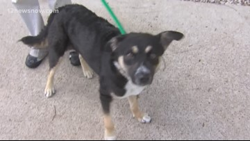'Evie,' five-year old pup needs a family, loves to swim