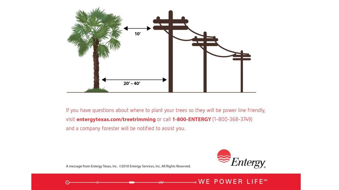 Entergy Warns Customers Not To Plant Palm Trees Near Power Lines 12newsnow Com