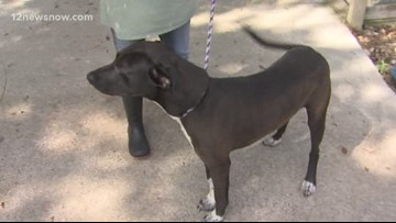 'Carl,' 10-month-old retriever-mix looking for new family