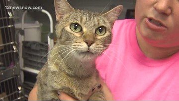 'Martini,' the cat needs a family of her own