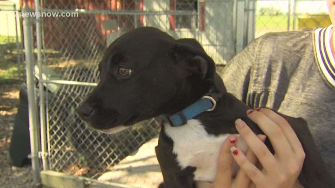 'Sherrie,' energetic lab-retriever mix needs a new home