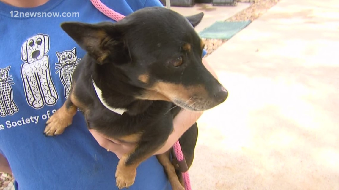 'Clara' 7-year-old pup needs a forever home