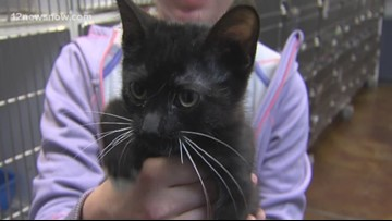 'Onion' is a month-old kitten who's looking for her new home