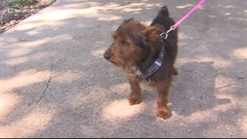 'Gary,' terrier mix needs a new family