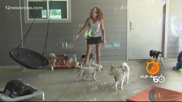 Up in 60: Elite Pet Resort offering around-the-clock dog services in Beaumont