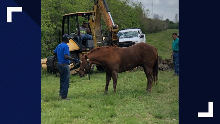 horse pulled out of Port Arthur canal