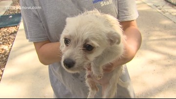 'Hodge,' the pup is ready to join your family