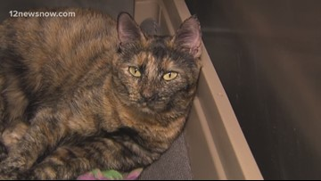2-year-old Thumbelina just wants to cuddle with you on the couch