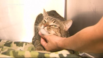 'Caesar,' the kitty needs a family of his own
