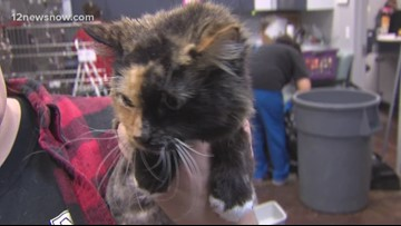 Pet of the Day, Michelle, is looking for a family to settle down with
