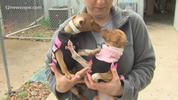 Two pet sisters Reida, Miller look for their forever home in SETX