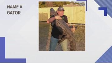 Gator Country asking for help naming new gator