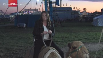 12News reporter Parris Kane takes a camel ride at the YMBL South Texas State Fair