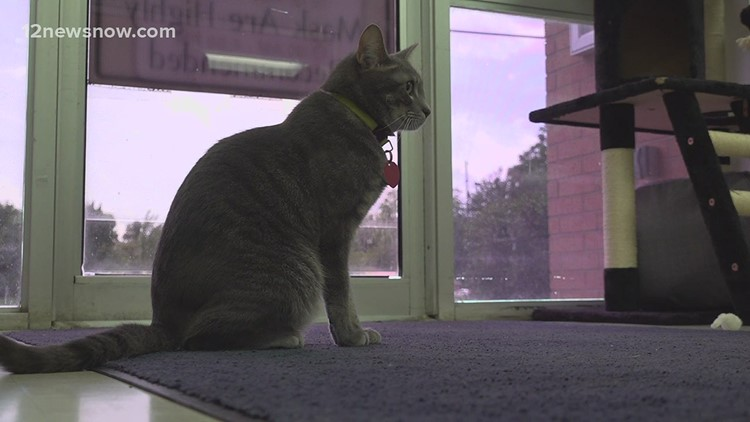 Beaumont Animal Care Facility has begun accepting cats again