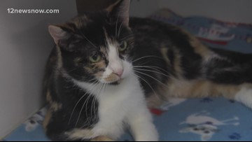 'Lucy Tin' is a year-old kitty that needs a loving family