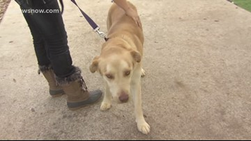 'Alfie,' year-old pup looking for a family