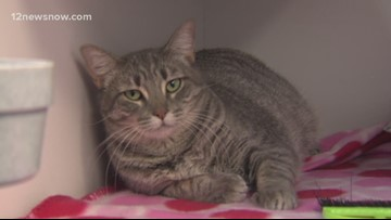 'Broccoli' a cat ready to play in a new home